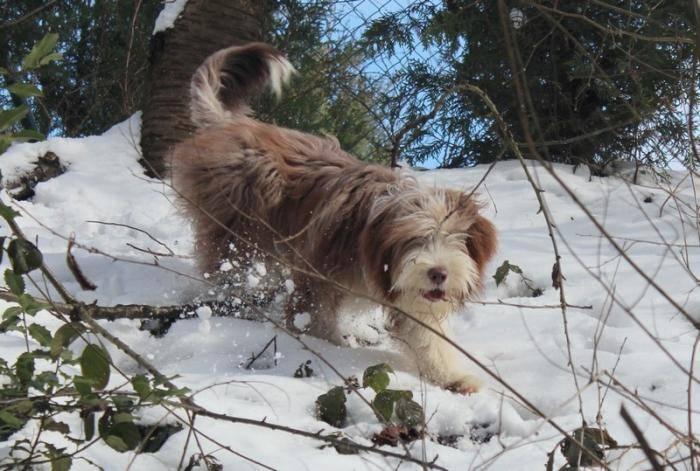 Helwing – Lily dans la neige copine de Kassam - Colley barbu