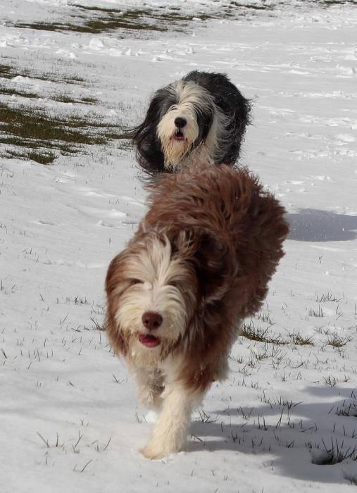 Helwing – Lily et Kassam dans la neige - Colley barbu