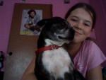 Scooby&Me - Terrier de Boston Mâle (7 ans)
