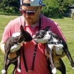 Wilson and Rio - Terrier de Boston (1 an)