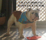 Doreval Happy Face Victor - Bouledogue Anglais - Bulldog Anglais