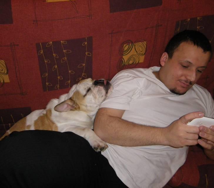 Fripouille et moi - Bulldog Anglais Mâle (1 an)