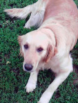 sheila - Chien de loutre (7 ans)