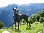 Ulric 1 - Dogue Allemand