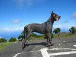 Ulric 2 - Dogue Allemand