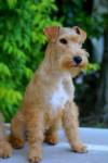 ABSOLUTE DOLCE VITA LAKELAND TERRIER - Lakeland Terrier