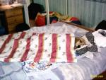 c'est ma couverture - Basset Hound