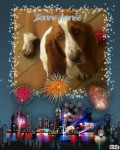 basset hound fiona 5mois - Basset Hound