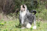 Photo Petit chien lion