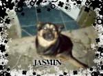JASMIN - Chien d'eau frison (5 mois)