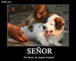 mono y perro - Chien d'Oysel allemand