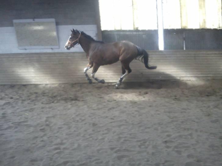 Escort Dancer - Mâle (6 ans)