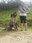 Dogo canario Hunter - Dogue des Canaries
