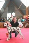 Chien Expo Amiens - Dalmatien  (Vient de naître)