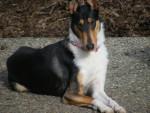 Starla - Colley (3 ans)