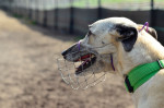 Photo Greyhound