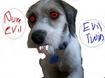Chien Doodles evil twin - Parson Russell Terrier Femelle (4 ans)