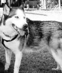 Nuria - Husky (6 ans)