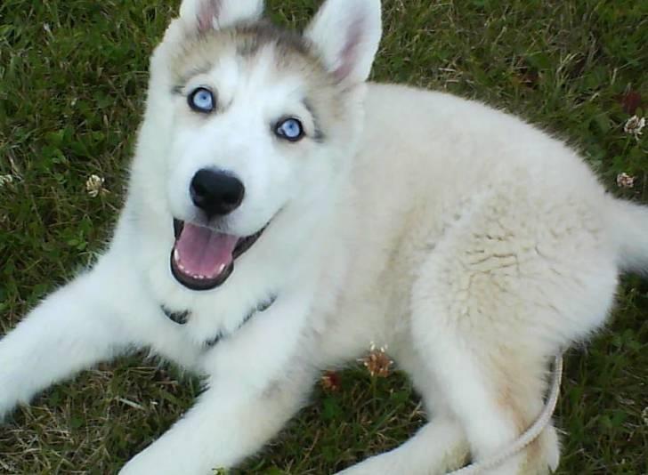 eska - Husky (5 mois)