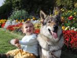 Arès,chien-loup tchécoslovaque - Chien Loup Tchèque