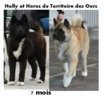 Holly et Horus du Territoire des Ours 7 mois - Akita américain (7 mois)