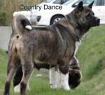 Country Dance du Territoire des Ours - Akita américain