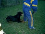 Teos du jardin des monts d\'or - Rottweiler