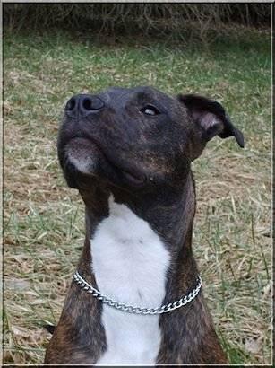 tania - Rottweiler (2 mois)