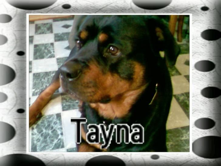 tayna - Rottweiler (5 ans)