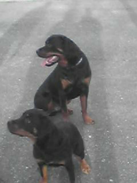 Kaira et Ulli son pote - Rottweiler