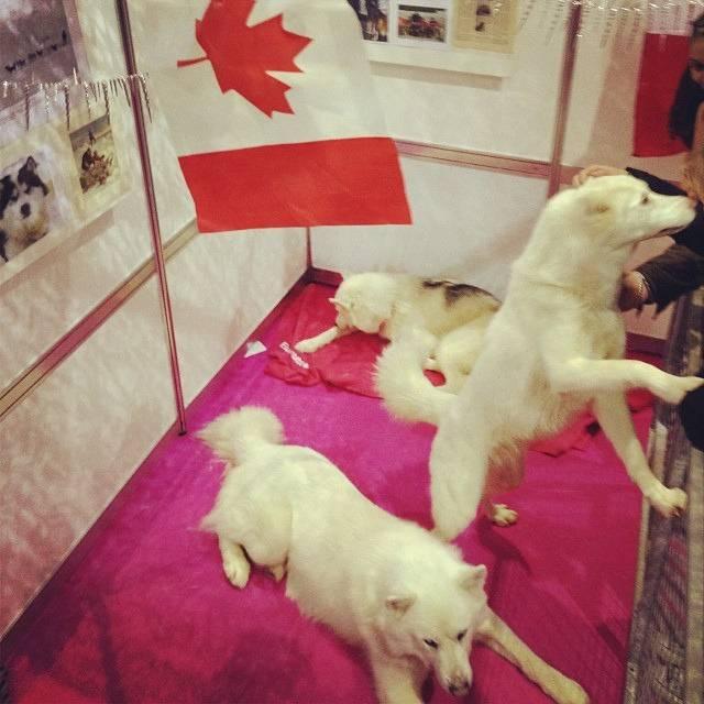 Photo Esquimau canadien