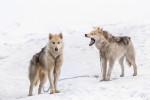 Photo Inuit du Nord