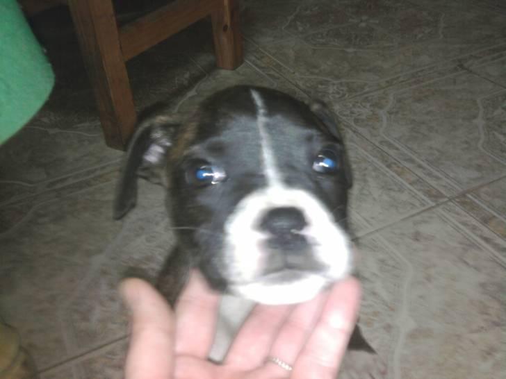 yara - Boxer (2 mois)