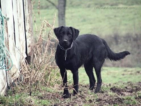 Nikita - Border Collie (12 ans)