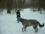 syntaxe, mon irish wolfhuond - LEVRIER IRLANDAIS - Lévrier irlandais