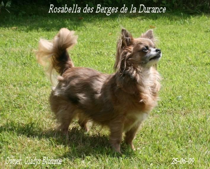 Rosabella - Chihuahua (9 ans)