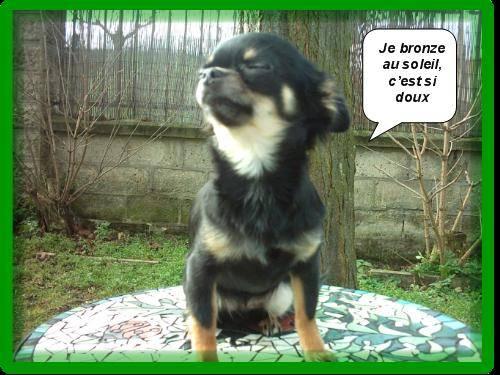 C'est si bon le soleil !!! - Chihuahua