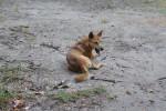Photo Dingo