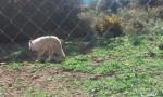 Escarcha - Loup (7 ans)