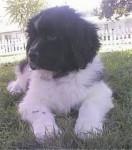 Bepper - Loup (11 mois)