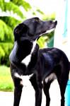 balia - Femelle (4 ans)