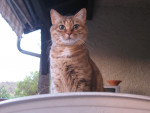 Chat Canaille - Femelle (9 ans)
