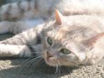 Chat Mimine - Femelle (10 ans)