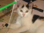 Chat Tagada - Femelle (3 mois)
