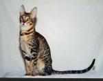 Chat  - Mâle (Vient de naître)
