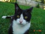 Chat Nikita (décédée) - Femelle (0 mois)