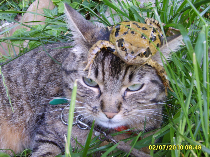 Chat Peluche - Femelle (3 ans)
