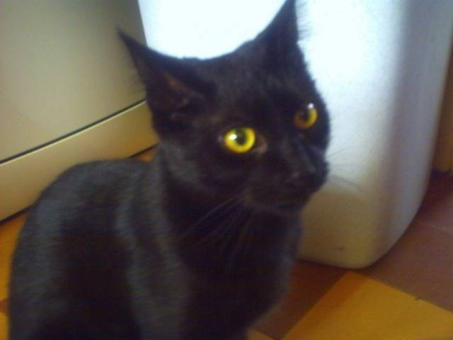 fifille - Chat (10 ans)