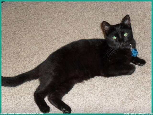 Chocolate laying in the hallway - Chat (2 ans)