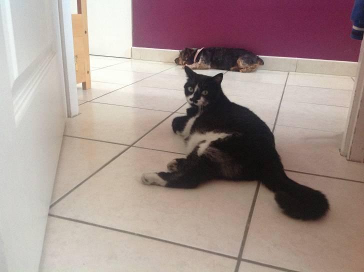Myrtille et Loli - Chat (3 ans)